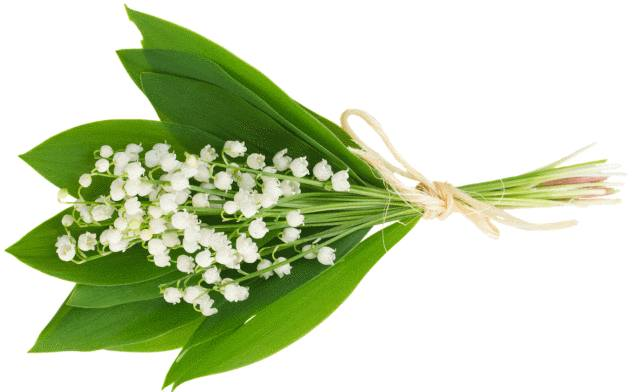 Conserver un brin de muguet et le muguet en pot toutpratique - Bouquet de muguet photo ...