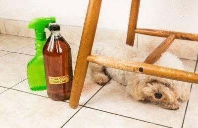 astuce pour repousser chien