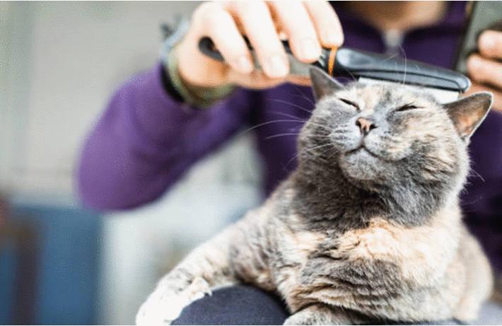 Soigner votre chat toutpratique - Mon chat fait pipi dans mon lit ...