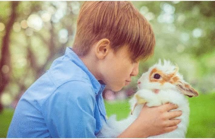 Le lapin et sa cage