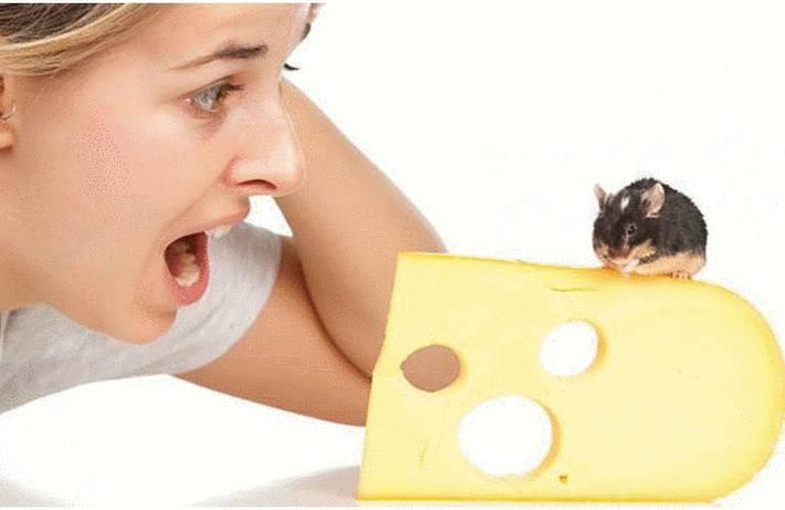 Chasser rats et souris