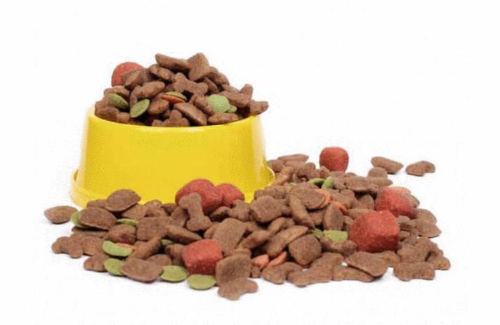 Que mange un chien