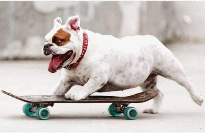 Répulsif naturel chien