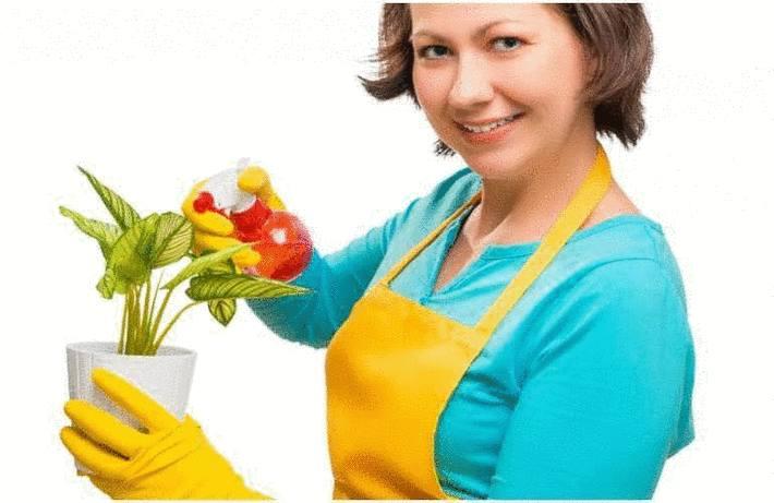 Engrais naturel : 10 astuces pour donner un coup de fouet à vos plantes
