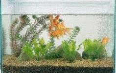 Nettoyage aquarium tout pratique for Nettoyer un aquarium poisson rouge