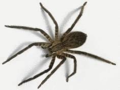 Les araign es comment s 39 en d barrasser tout pratique for Araigne sauteuse maison