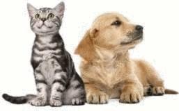 La responsabilit des propri taires de chat ou de chien - Loi sur les chats et le voisinage ...