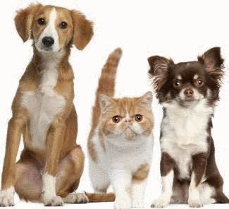 La responsabilité des propriétaires de chat ou de chien