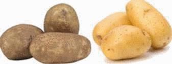 Conservation pomme de terre tout pratique - Conserver les pommes de terre ...