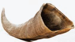 une corne