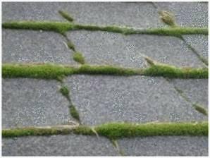 Mousse sur le toit