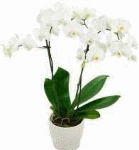Comment entretenir son orchid e tout pratique Comment entretenir orchidee