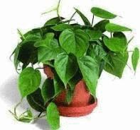 acheter une plante et l 39 installer chez vous tout pratique