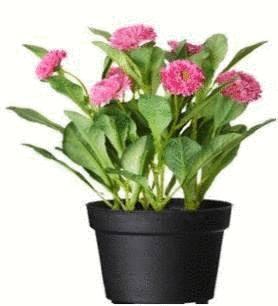 Soin des plantes d 39 int rieur tout pratique for Nettoyer feuilles plantes