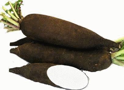 """Résultat de recherche d'images pour """"tisane radis noir"""""""