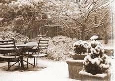 quelles plantes rentrer avant l 39 hiver tout pratique. Black Bedroom Furniture Sets. Home Design Ideas