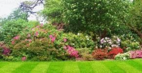 Tache de plante tout pratique for Nettoyer feuilles plantes
