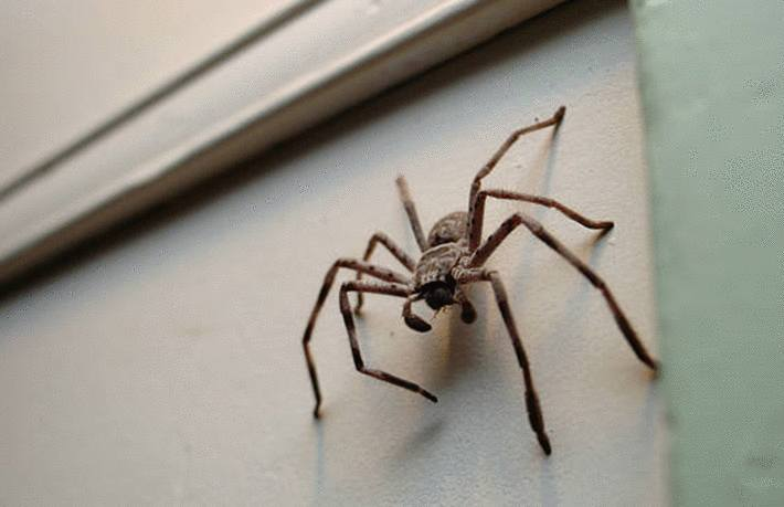 comment chasser araignée maison