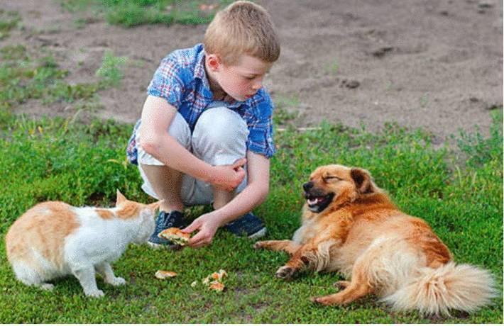 que faire de son chien ou chat pendant les vacances