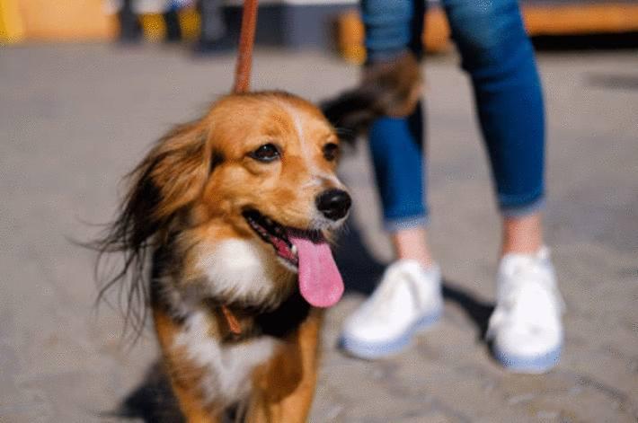 promener son chien conseils
