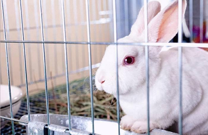 comment nettoyer la cage du lapin