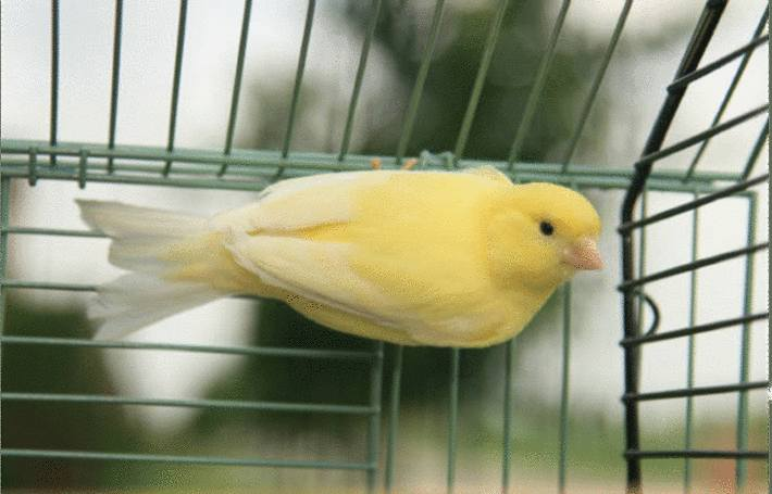 amenager et nettoyer cage de l'oiseau