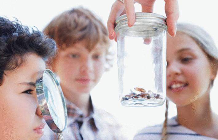 des enfants étudient des insectes dans un bocal