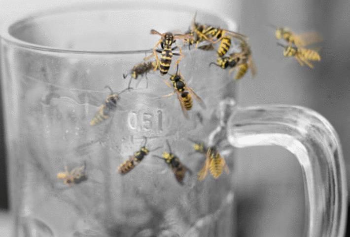 des guêpes sur un verre de bière