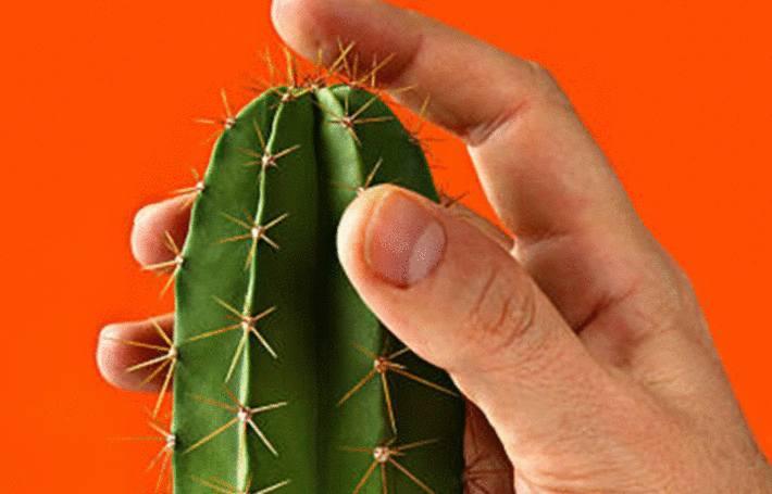 des doigts sont piqués par un cactus