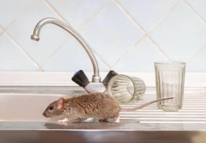 eliminer rats et souris