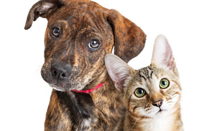 que faire contre l'abandon des chiens et des chats