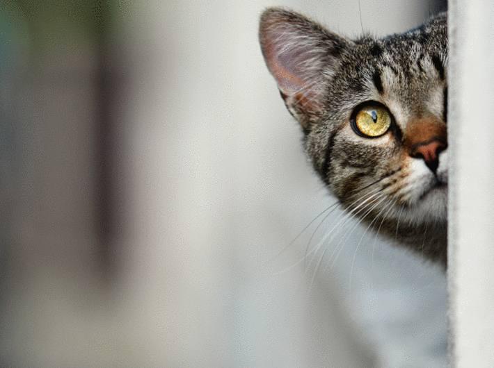 Enlever les poils d 39 un chat ou d 39 un chien tout pratique - Repulsif chat jardin naturel ...
