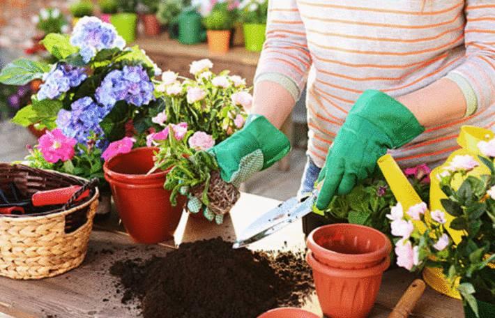 comment prendre soin des plantes