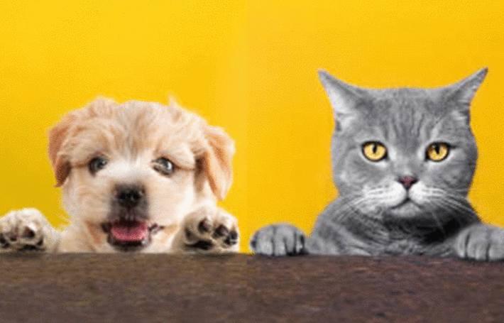 quel traitement naturel anti puces pour chien et chat. Black Bedroom Furniture Sets. Home Design Ideas
