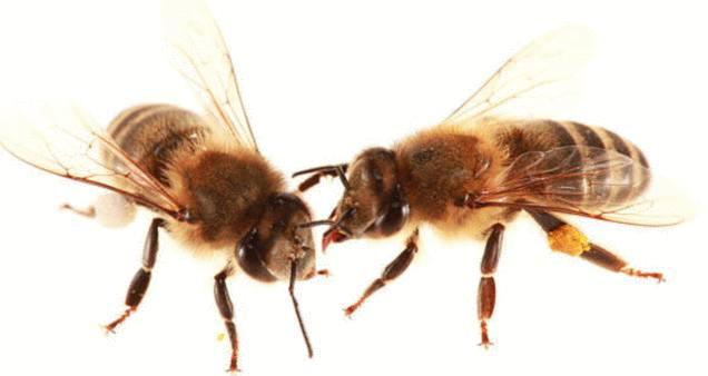 abeille : 10 solutions pour sauver les abeilles