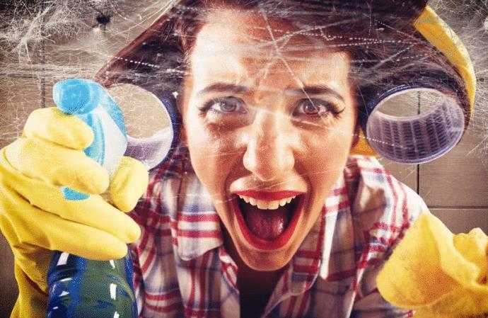 araignée comment s'en débarrasser