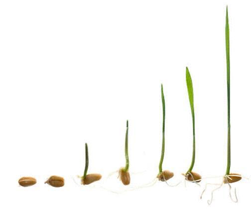 comment faire pousser des graines