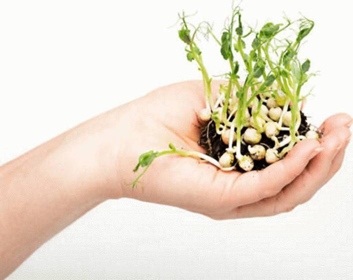 faire germer des graines