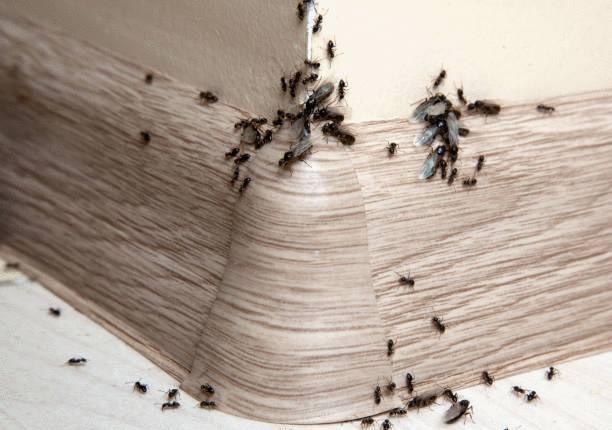 comment faire partir des fourmis naturellement