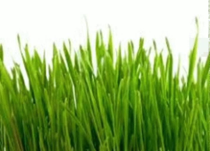 pelouse-verte-haute-sur-fond-blanc