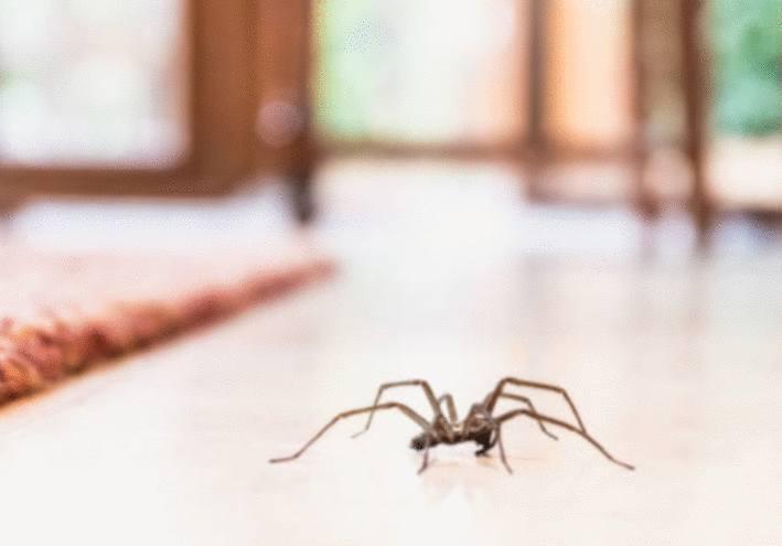 piqure d'araignée que faire