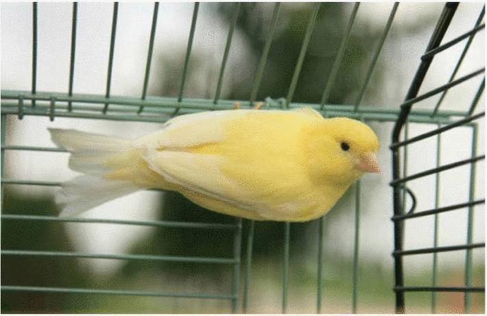 La cage de l'oiseau