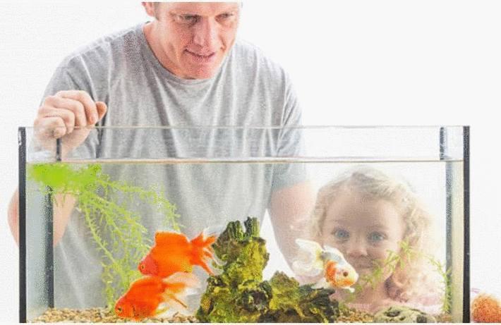 Nettoyage aquarium