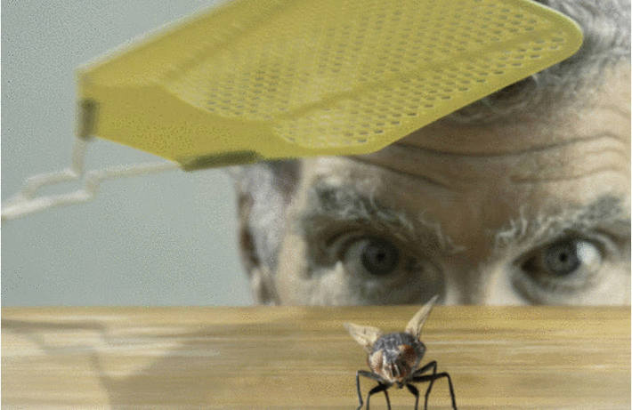 Les mouches : comment s'en débarrasser