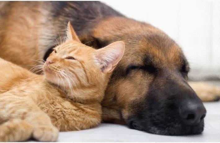 finest selection 9f5fc d3ef3 Enlever les poils d un chat ou d un chien - Tout pratique