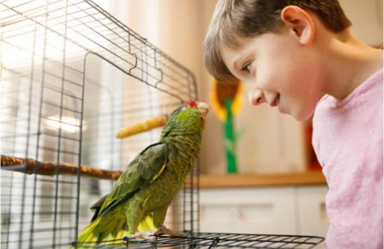 Prendre soin d'un oiseau