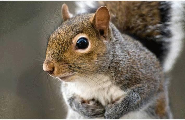 Comment se débarrasser des écureuils