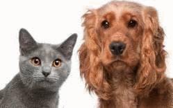 Puce et tique - quel produit pour traiter chat ou chien