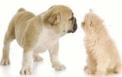 Age Reel Chien age de son chien et de son chat - tout pratique