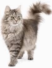 enlever les poils d 39 un chat ou d 39 un chien tout pratique. Black Bedroom Furniture Sets. Home Design Ideas
